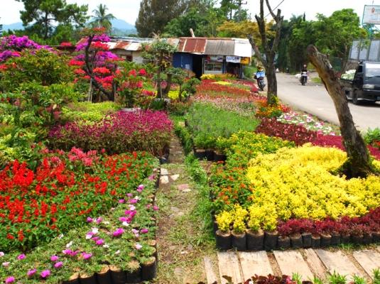 Pedagang bibit tanaman hias di seputar Kompleks Kota Bunga.